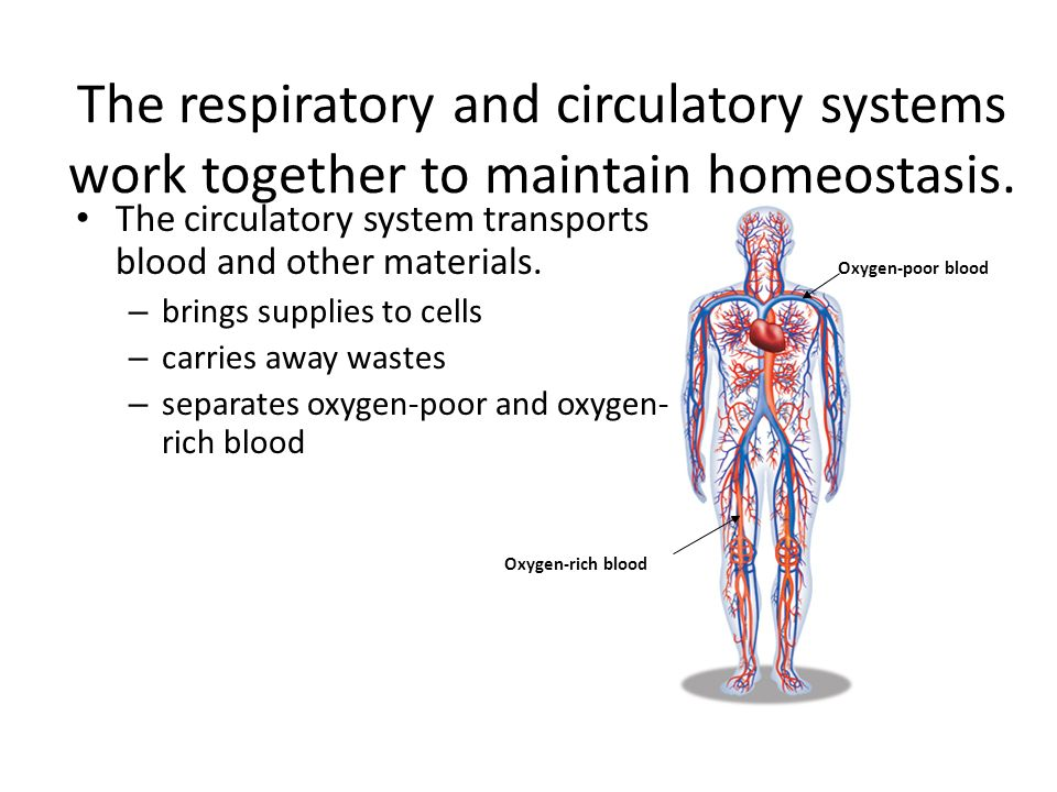 Assessment of the Cardiovascular and Respiratory Systems