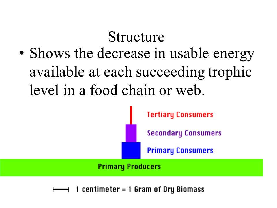 Structure Shows the decrease in usable energy available at each succeeding trophic level in a food chain or web.