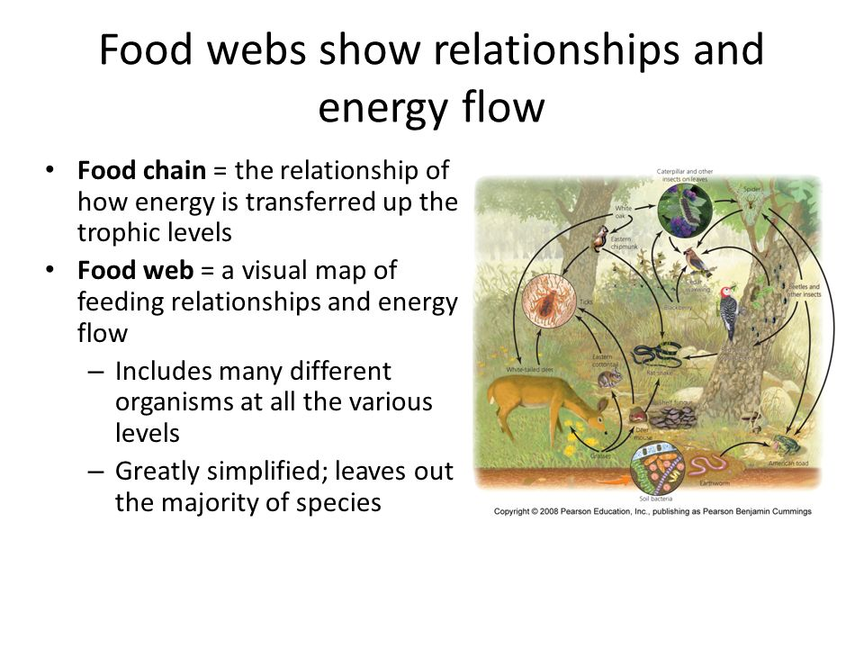 Food webs show relationships and energy flow
