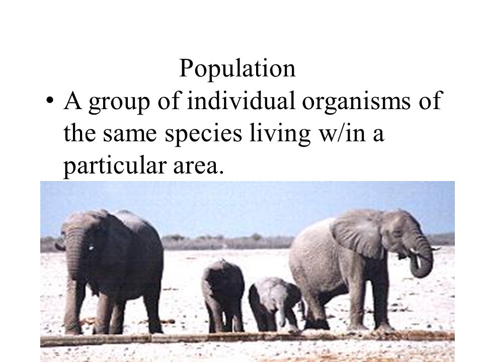 Population A group of individual organisms of the same species living w/in a particular area.