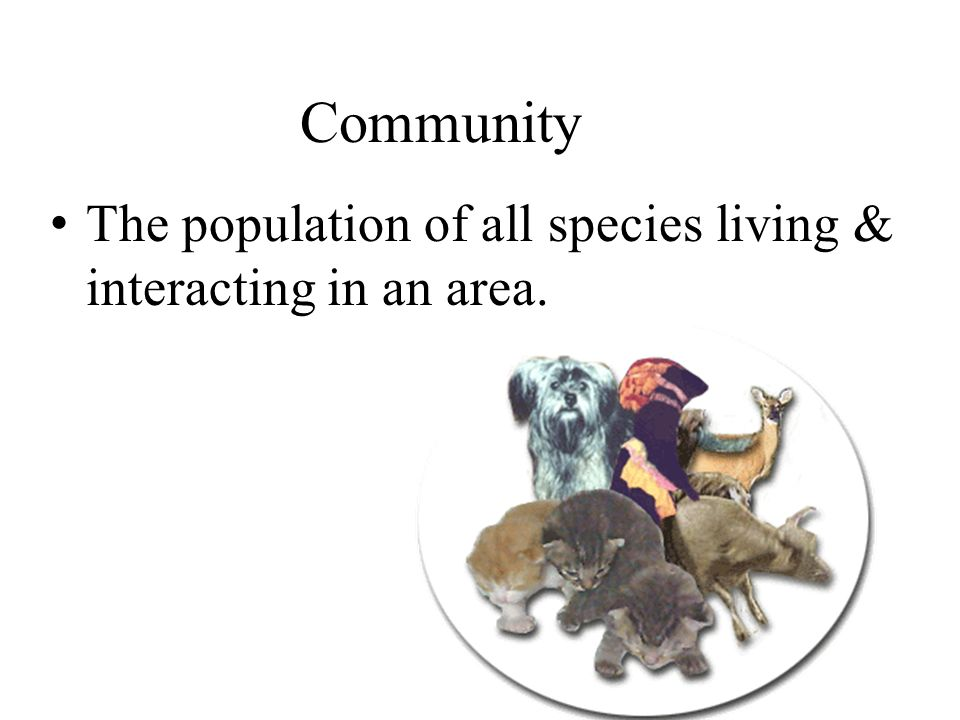 Community The population of all species living & interacting in an area.