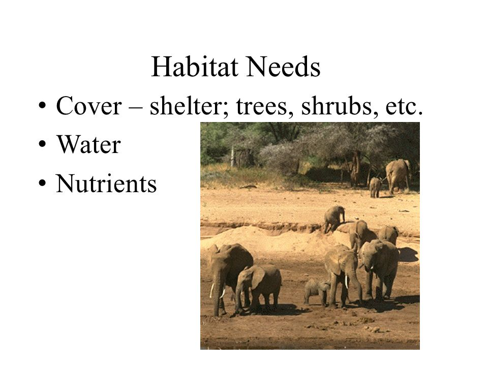 Habitat Needs Cover – shelter; trees, shrubs, etc. Water Nutrients