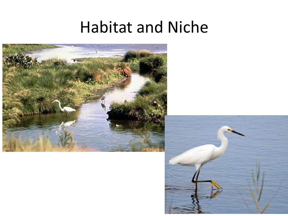 Habitat and Niche