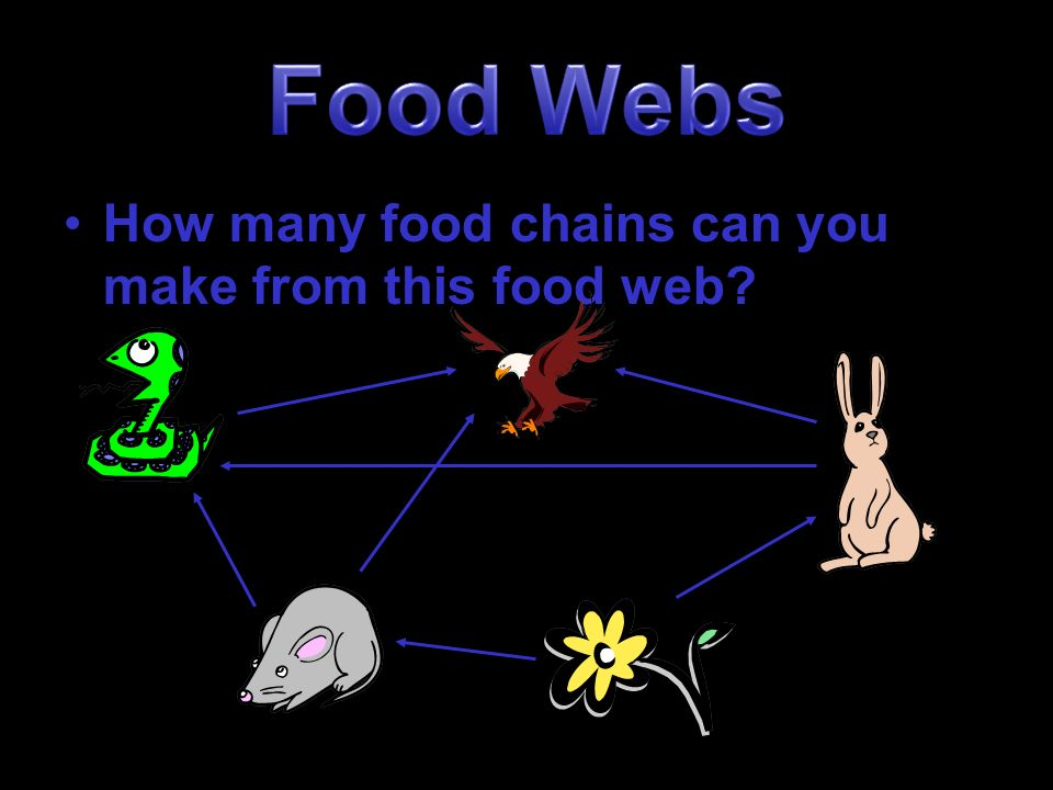 how to make a food web online