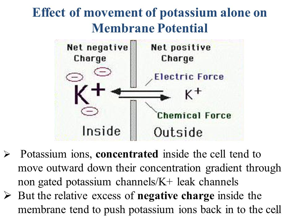 effect of detergent concentration on membrane Specific effects of lipid/protein and protein/protein interactions, it is essential to   membrane fusion already occurs at detergent concentrations below rsat and.