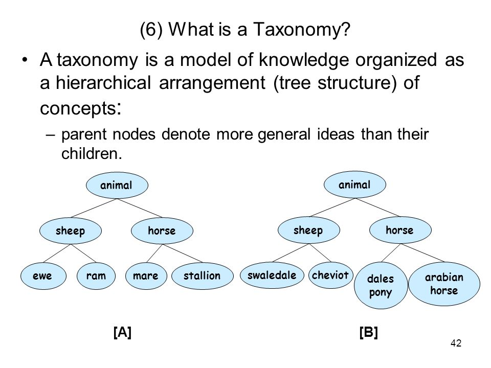 (6) What is a Taxonomy A taxonomy is a model of knowledge organized as a hierarchical arrangement (tree structure) of concepts: