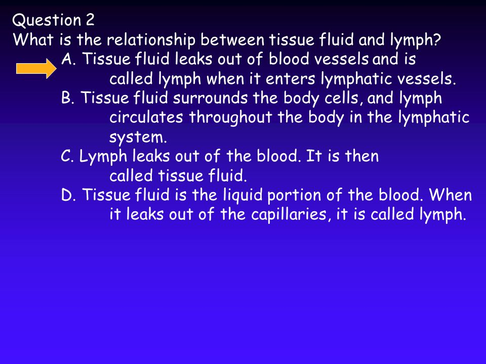 what is the relationship between b lymphocytes and plasma cells
