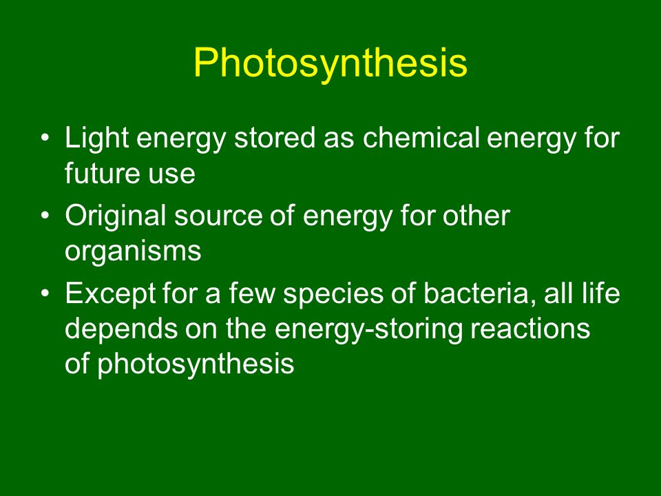 describe the light reaction of photosynthesis essay However, while cellular respiration is completed through animals (and some plants) by converting food and organic molecules to energy, photosynthesis is the process of converting energy from light sources, namely the sun, into chemical energy for plants, algae, and some bacteria's.