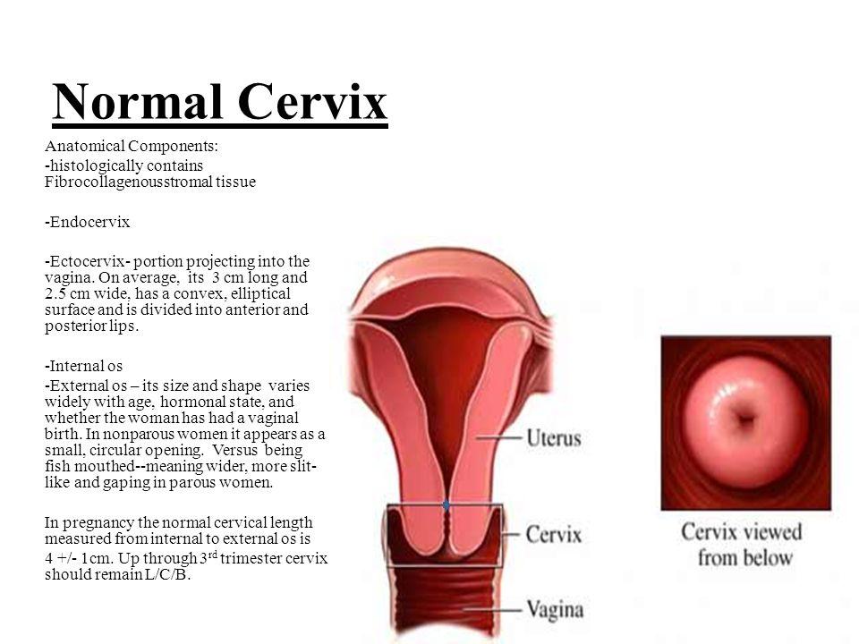 cervix anatomy definition choice image