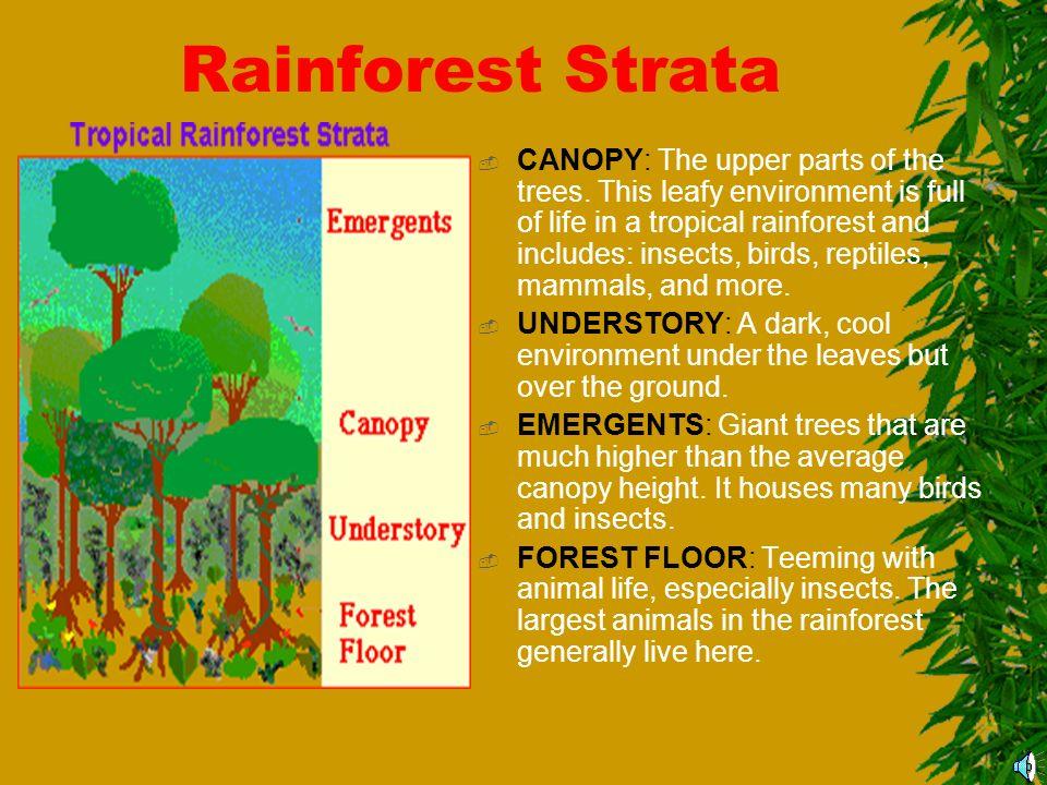 rainforest the amazing amazon