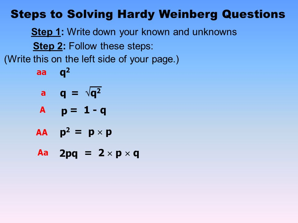 Hardy Weinberg Questions Giftsforsubs