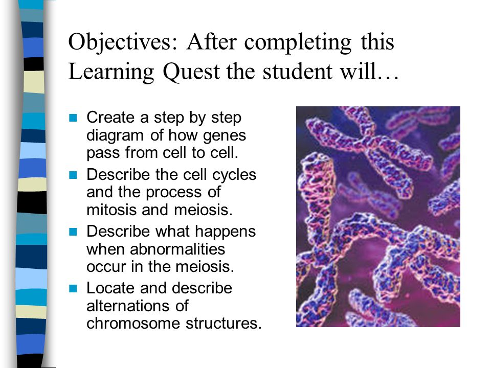 the cellular basis of reproduction and Cell reproduction is the process by which cells divide to form new cells each  time a cell divides, it makes a copy of all of its chromosomes, which are tightly.