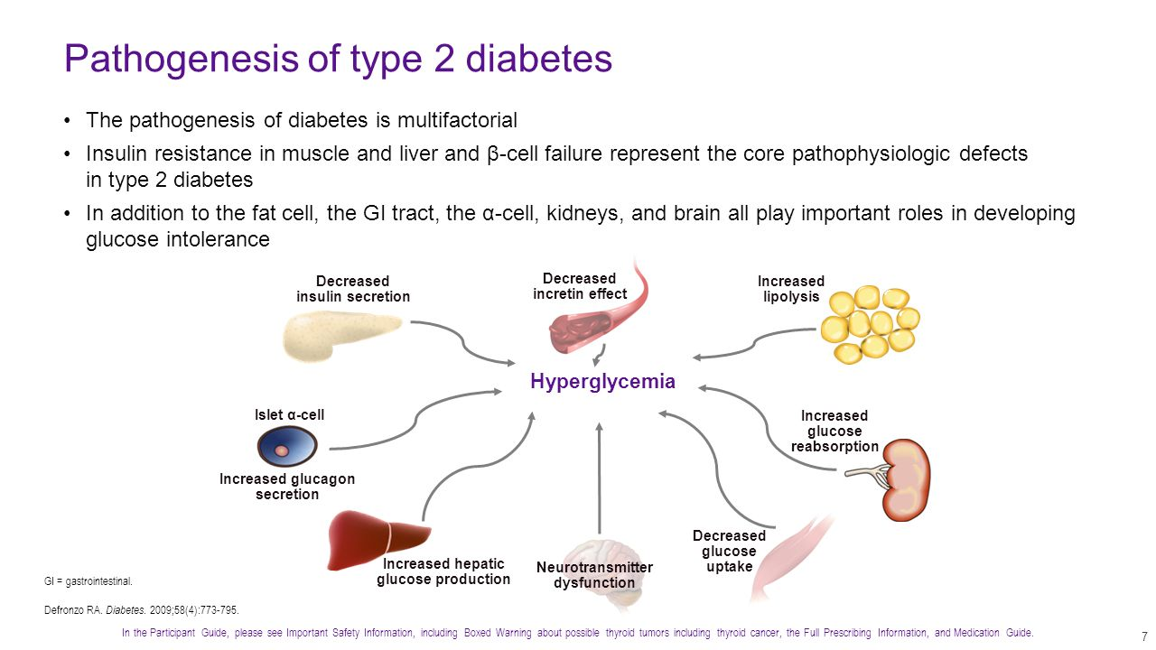 pathophysiology of type 2 diabetes Muscle insulin resistance as determined by the euglycemic-hyperinsulinemic clamp is clearly a risk factor for development of type 2 diabetes ()however, the pathophysiology of hyperglycemia in established diabetes relates to hepatic not muscle insulin resistance.