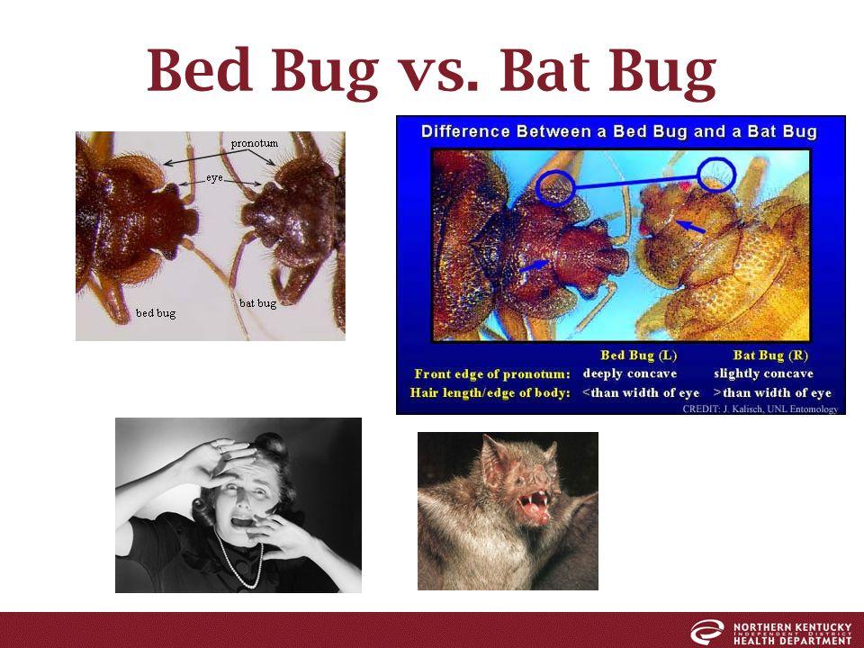 Bed Bugs Bob Mccandless R S Senior Health