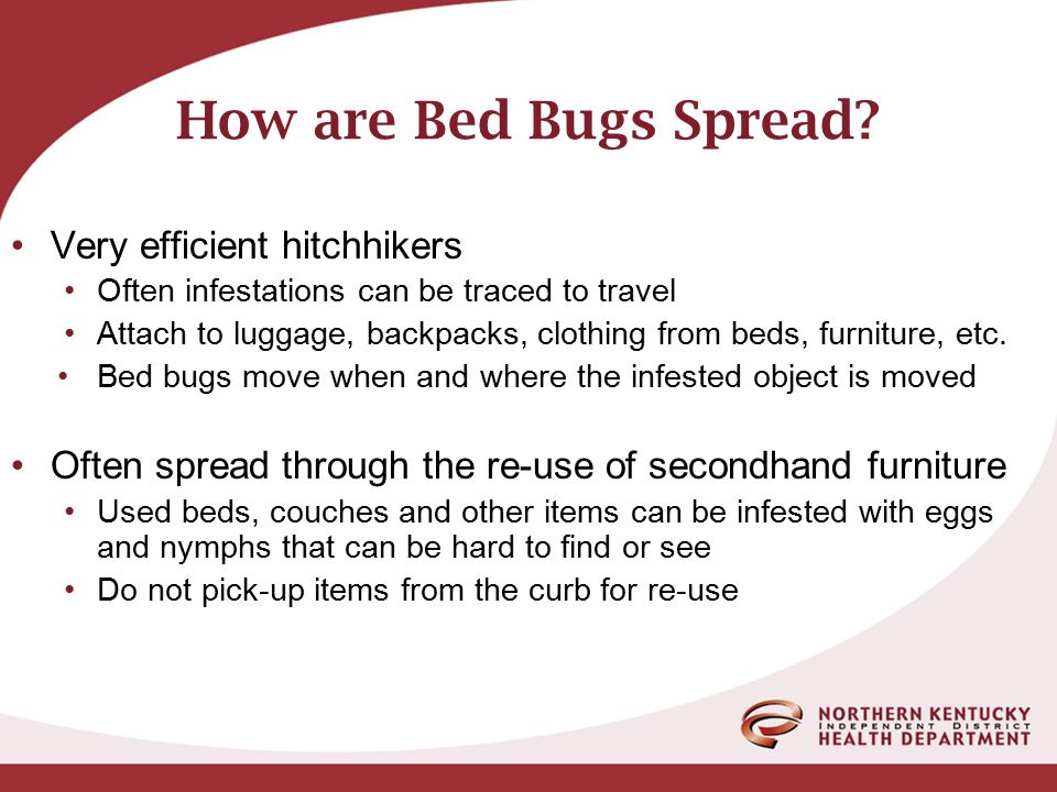 Bed Bugs Bob Mccandless R S Senior Health Environmentalist Ppt Video Online Download