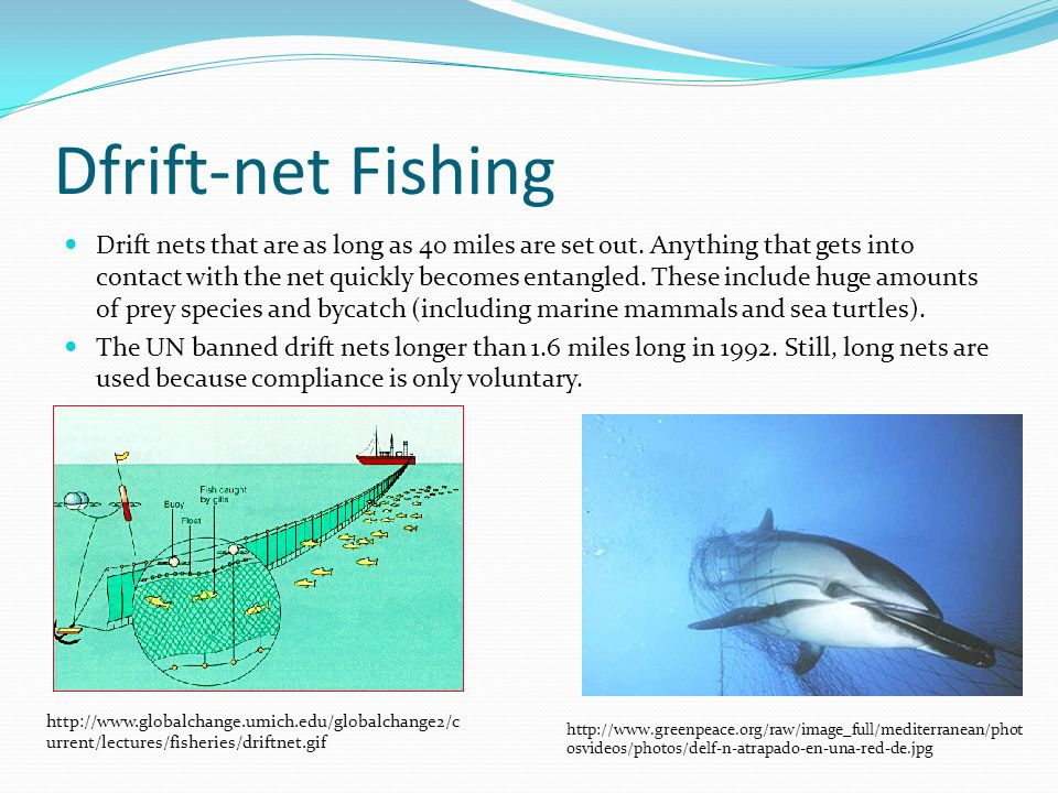 sustaining fisheries and catching fish ppt video online