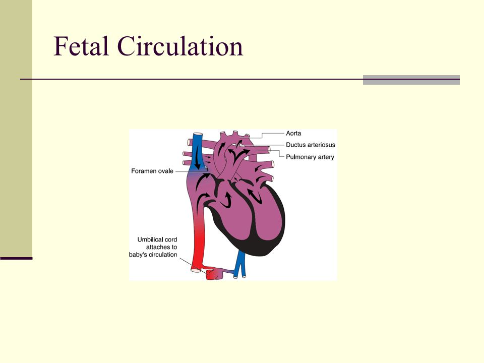 pediatric cardiovascular disorders ppt video online download