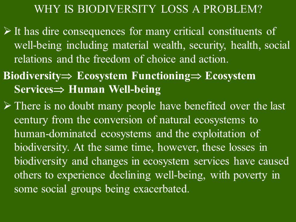 WHY IS BIODIVERSITY LOSS A PROBLEM