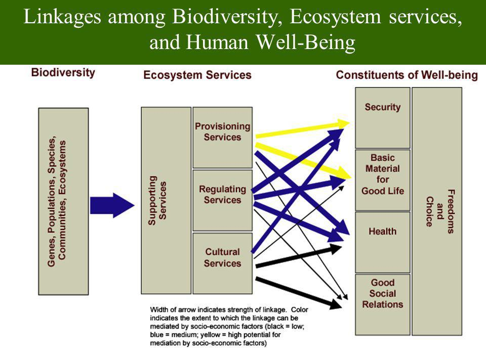 Linkages among Biodiversity, Ecosystem services, and Human Well-Being