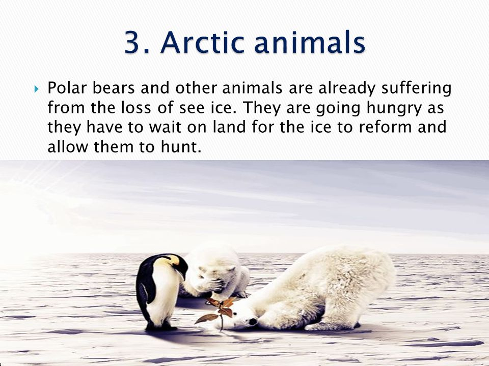 3. Arctic animals