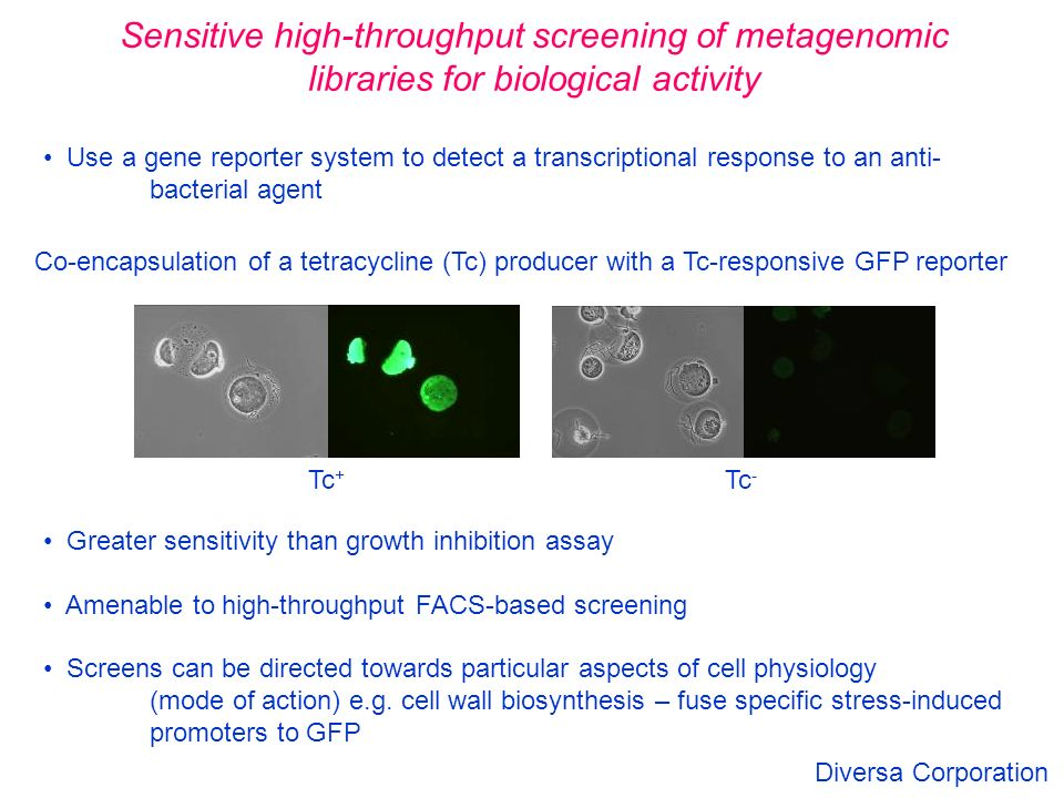 High Throughput Screening Of Natural Product Yield