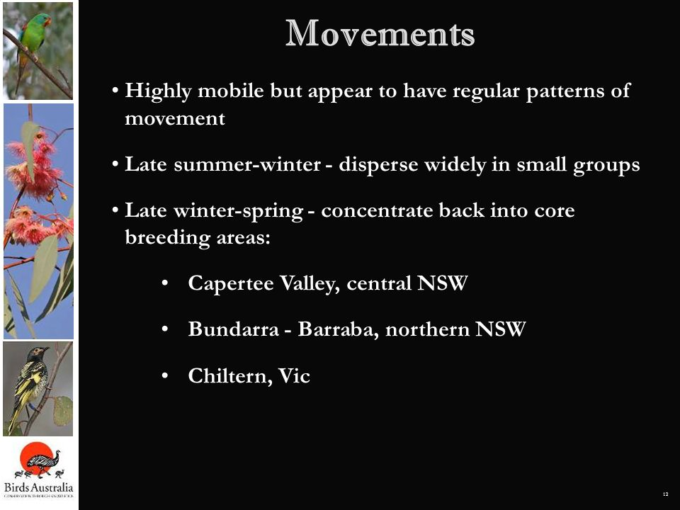 MovementsHighly mobile but appear to have regular patterns of movement. Late summer-winter - disperse widely in small groups.