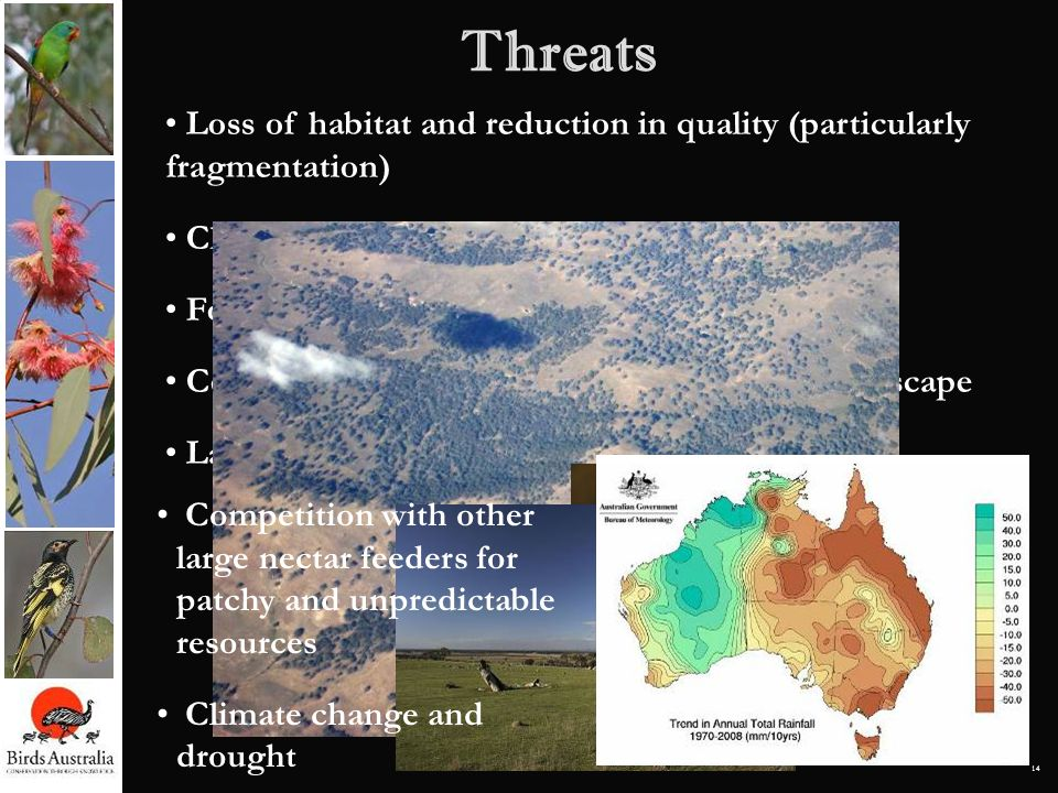 Threats Loss of habitat and reduction in quality (particularly fragmentation) Clearing for agriculture.