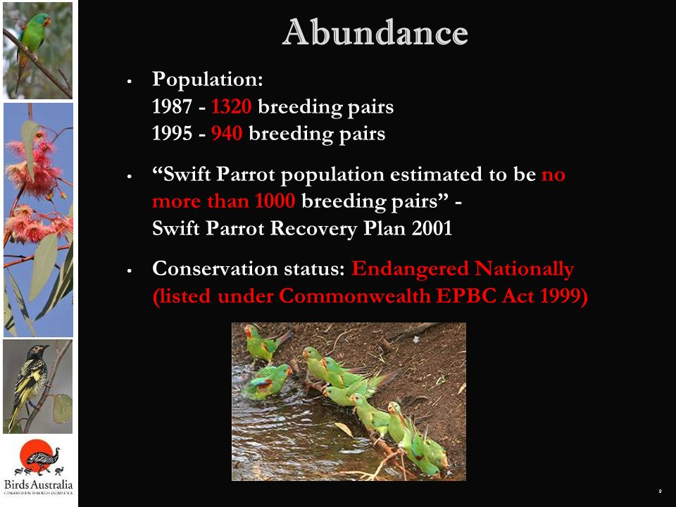 AbundancePopulation: 1987 - 1320 breeding pairs 1995 - 940 breeding pairs.