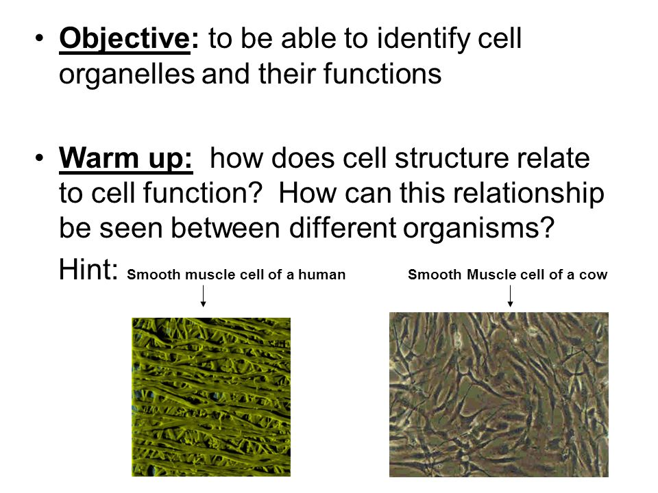 cell structure and function - ppt download, Muscles