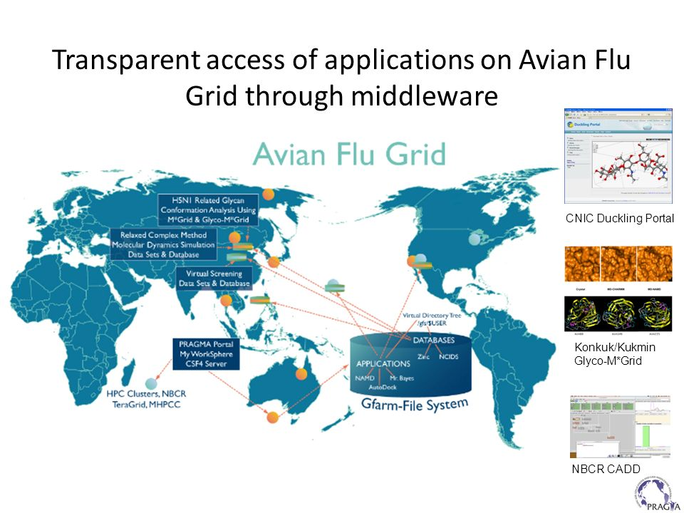 Transparent access of applications on Avian Flu Grid through middleware