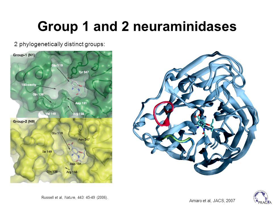 Group 1 and 2 neuraminidases
