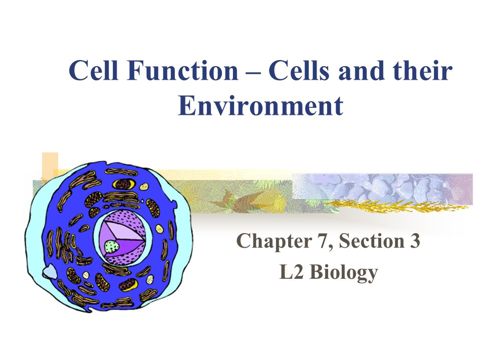 Cell Function – Cells and their Environment - ppt download