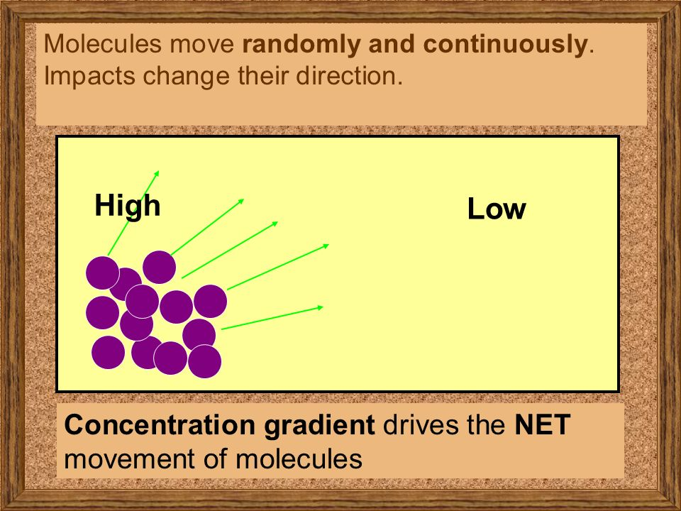direction and concentration gradients Observe that as k+ diffuses due to its concentration gradient, it causes the development of an electrical potential difference that acts in the opposite direction on positive ions indeed, the diffusion of k+ down its concentration gradient quickly creates an electrical potential difference that completely counterbalances the tendency of k+ to.