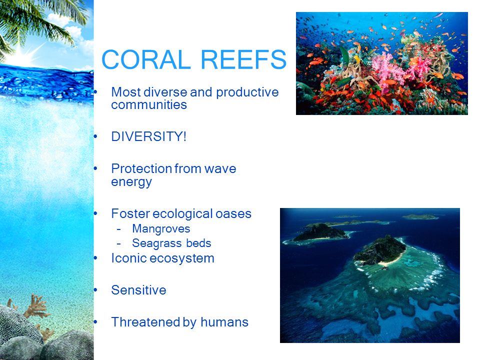 an essay on coral reefs As the largest living structures on the planet, coral reefs are home to 25 percent of all marine species and are important places for fish and other animals to eat, bring up their young and hide from predators.