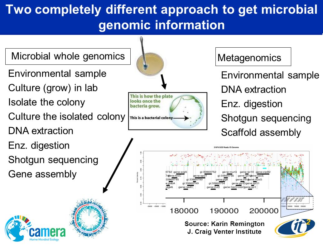 Two completely different approach to get microbial genomic information