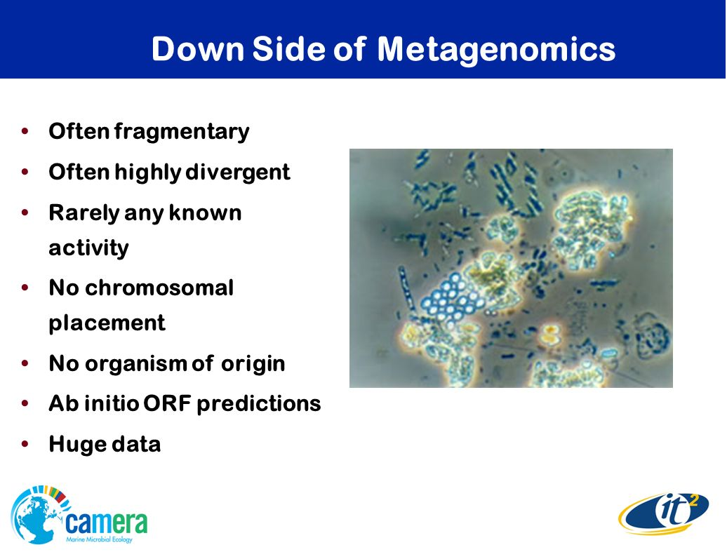 Down Side of Metagenomics