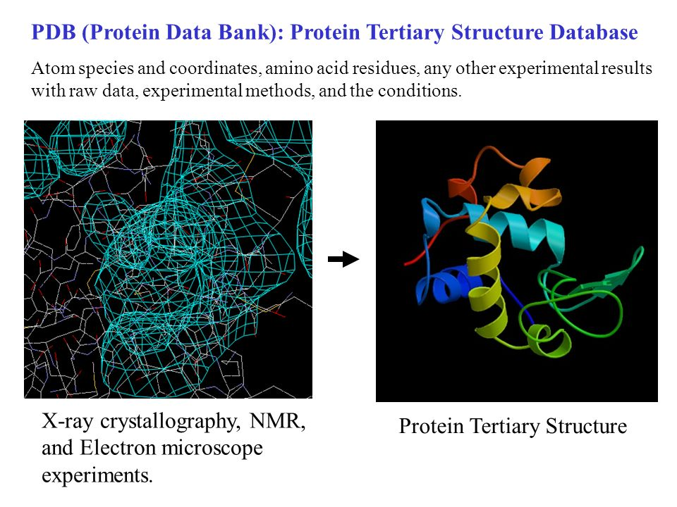 PDB (Protein Data Bank): Protein Tertiary Structure Database