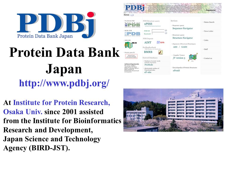 Protein Data Bank Japan