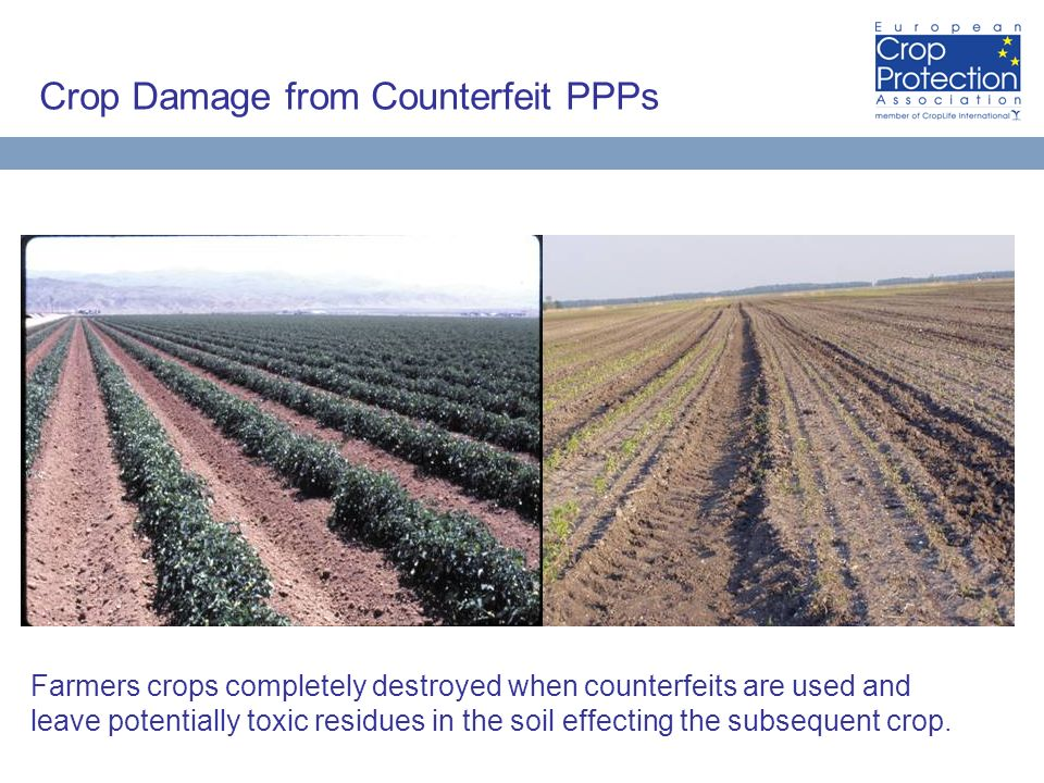 Crop Damage from Counterfeit PPPs