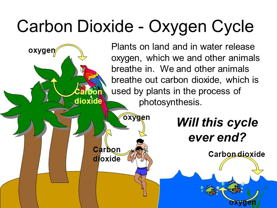 How Do Animals Get Carbon?