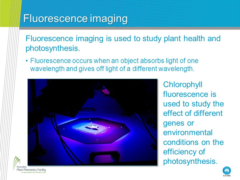 Fluorescence imaging Fluorescence imaging is used to study plant health and photosynthesis.