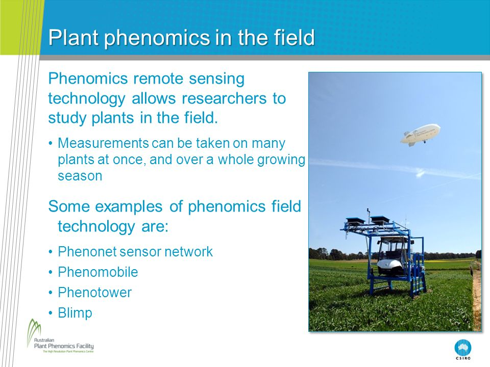 Plant phenomics in the field