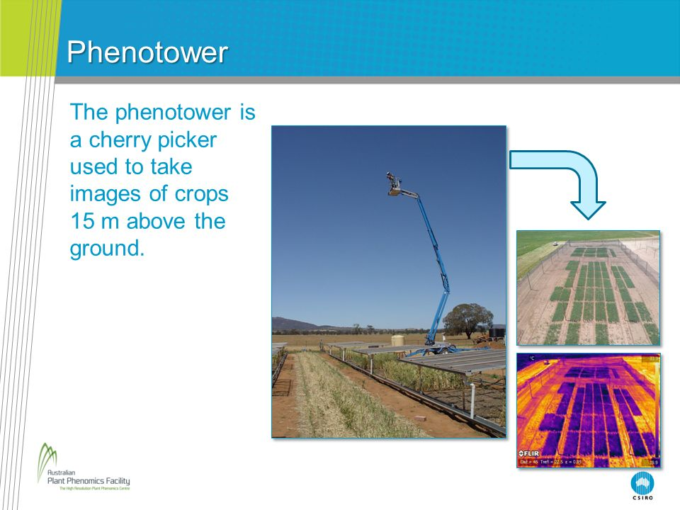 Phenotower The phenotower is a cherry picker used to take images of crops 15 m above the ground. Notes for teachers: