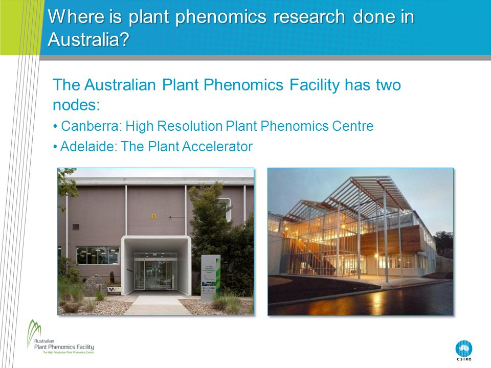 Where is plant phenomics research done in Australia
