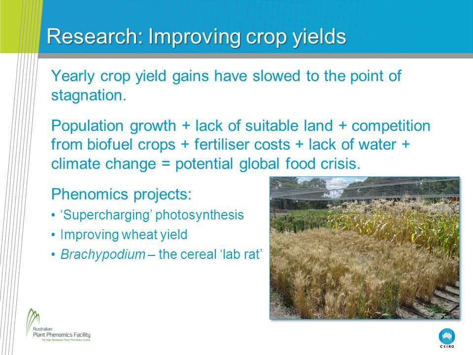 Research: Improving crop yields