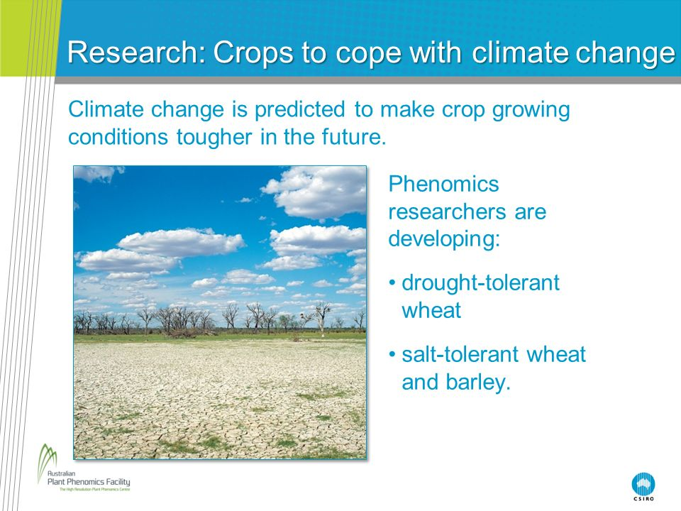 Research: Crops to cope with climate change