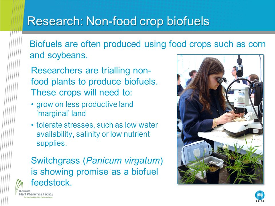 Research: Non-food crop biofuels