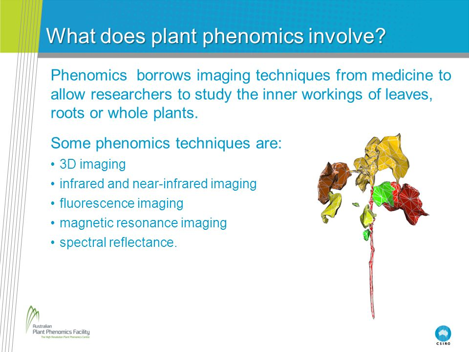 What does plant phenomics involve