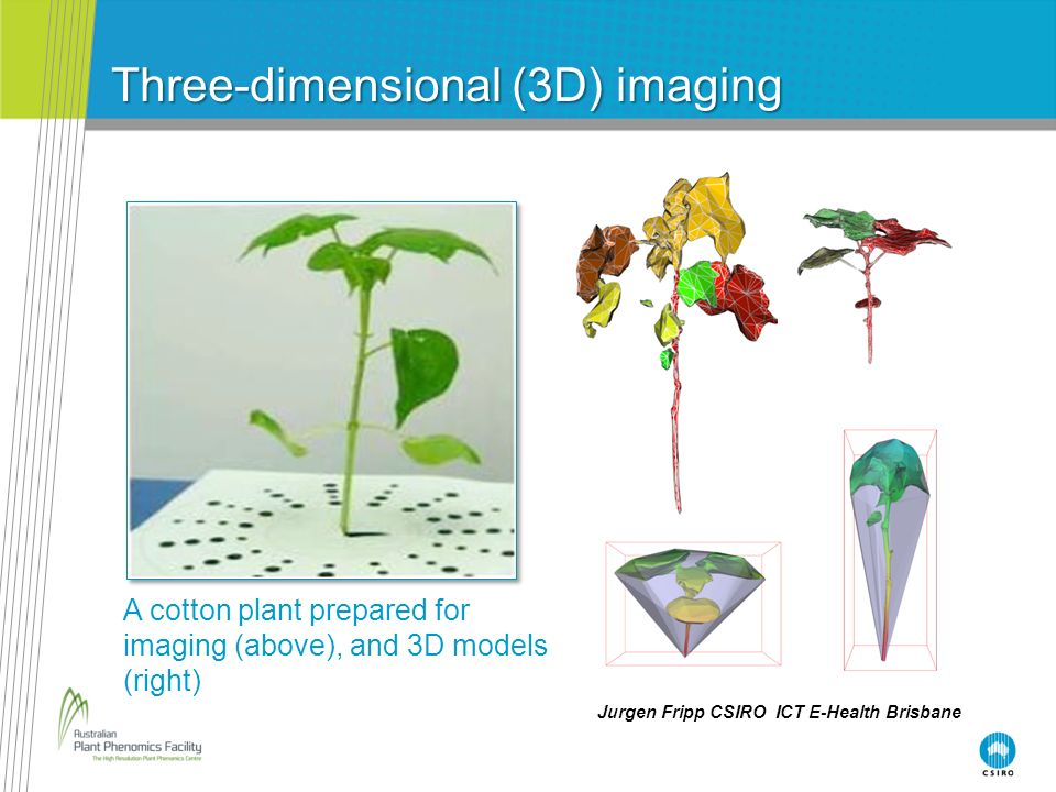 Three-dimensional (3D) imaging