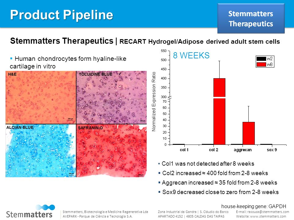 Product Pipeline Stemmatters Therapeutics | RECART Hydrogel/Adipose derived adult stem cells. 8 WEEKS.